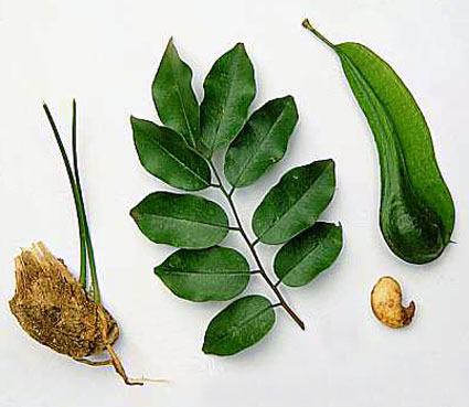 Rocky Mountain Oils | Balsam of Peru Essential Oil